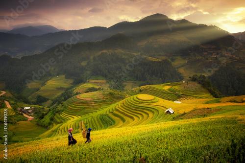 Garden Poster Rice fields Rice fields on terraced of Mu Cang Chai