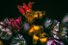 Dark Colors In The Dark. Tulip...
