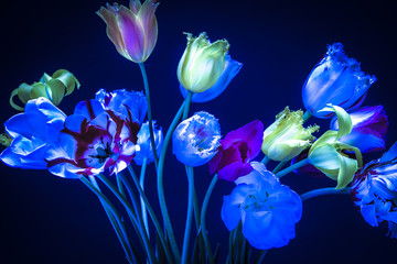Obraz na SzkleTulips on March 8. Tulips neon lighting in the dark. The color o