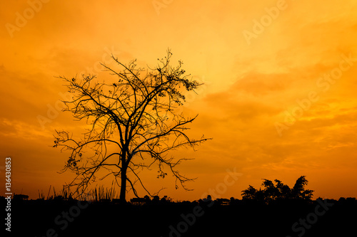 Poster Corail Sunset with silhouette of leafless tree branch