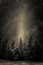 Rayons Lumineux D'hiver