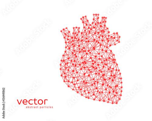Abstract Vector Illustration Of Human Heart Kaufen Sie
