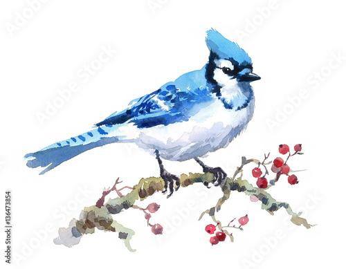Valokuvatapetti Watercolor Bird Blue Jay Hand Painted Illustration