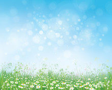 Vector Summer Nature  Background,  Blossoming Flowers Field On B