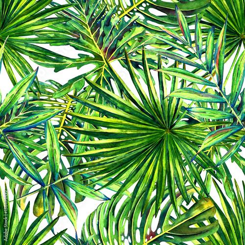 Fototapeta liście   liscie-tropikalnej-palmy