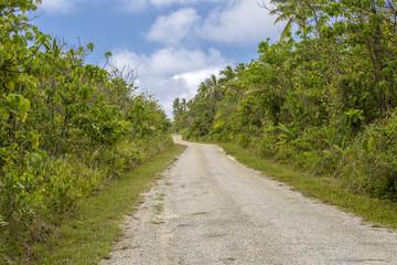 Fototapeta na wymiar Ring road through native tropical bush, Niue