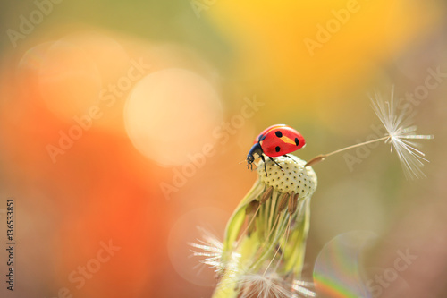 Ladybug looking parachute