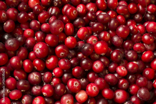 many ripe berries of cranberry on the surface very red