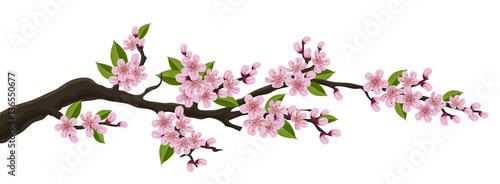 Fotografija Cherry tree branch with pink flower and green leaf