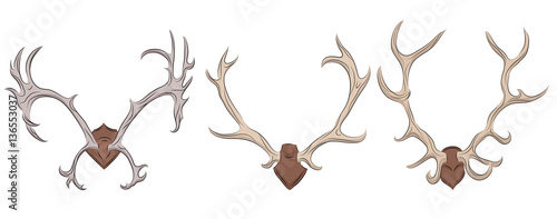 Fotografiet Set of different deer antlers. Vector element for your design