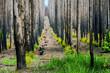 Nach einem Waldbrand in Südafrika