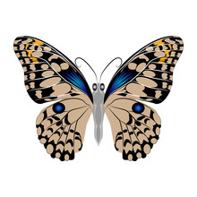 Bright Beautiful Brown Butterfly. Vector Illustration Isolated.