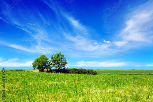 Poster Blauw Summer landscape with field and trees.
