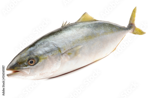 Tuna on white background Wallpaper Mural