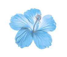 Blue Flower Isolated On White ...