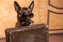 Dog Traveler With Cases In Eyeglassess