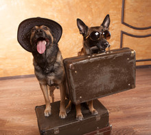 Two Dog Travelers With Case