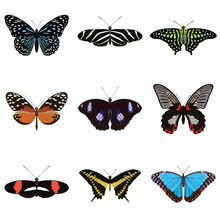 Set Of Nine Butterflies