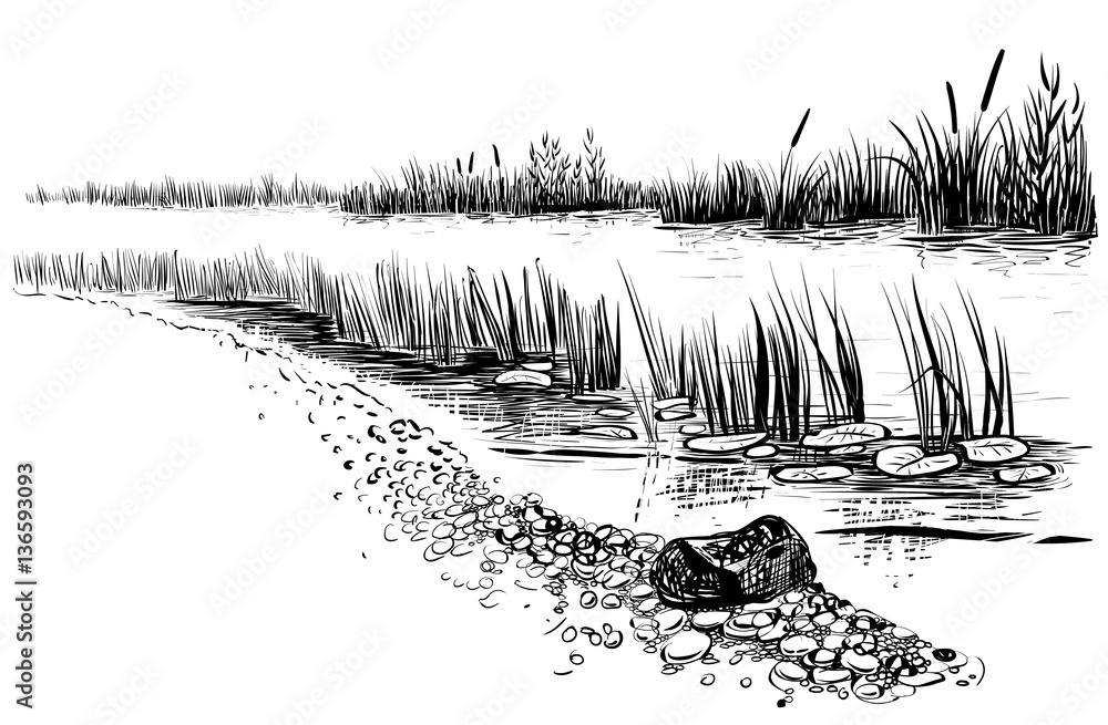 Fototapety, obrazy: Bank of the river or swamp with reed and cattail. Sketchy style.