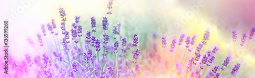 Stickers pour porte Lavande Soft focus on lavender flowers in flower garden, lavender flowers lit by sunlight
