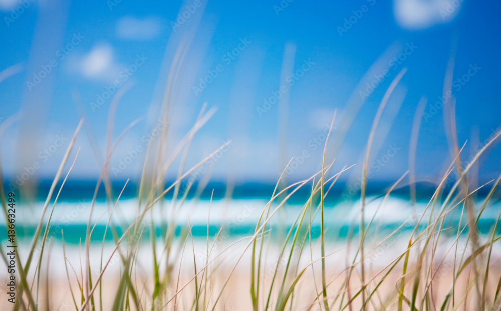 Fototapety, obrazy: Seagrass textures on the beach at Fraser Island