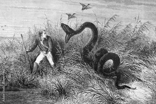 Photo Illustration / Serpent Anaconda attaquant un chasseur