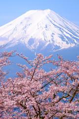 Panel Szklany Drzewa Japan Fuji and Cherry Blossom in Spring Season