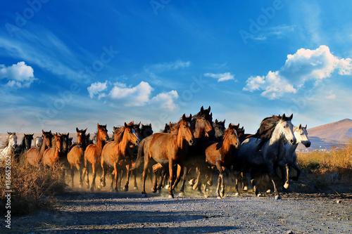 Fotografía  Galloping horses at the nature. Horses running.