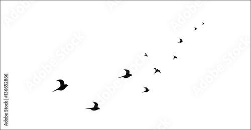 Valokuva  silhouettes of flying birds isolated on white background vector image