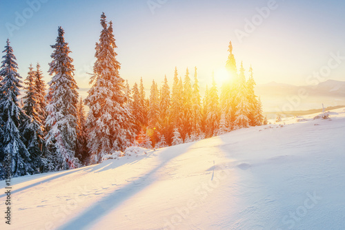 Deurstickers Wit Fabulous winter landscape in the mountains