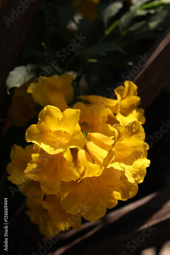 Delicate exotic yellow flowers buy this stock photo and explore delicate exotic yellow flowers mightylinksfo