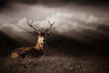 Deer Bathed In Sun Rays