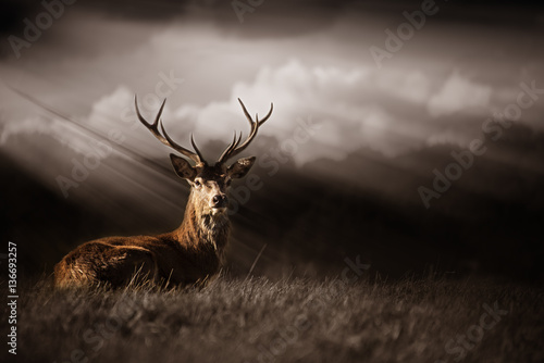 Photo sur Toile Cerf Deer Bathed in Sun rays