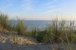 Oyats dans les dunes
