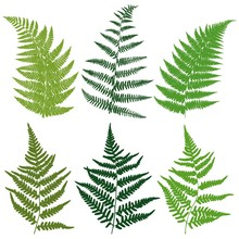 A Set Of Silhouettes Fern Leav...