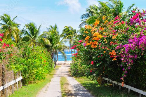 Caribbean, the island of Nevis