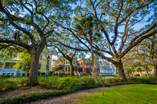 Trees At Forsyth Park, In Savannah, Georgia.