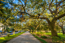 Walkway And Trees With Spanish Moss, At Forsyth Park, In Savanna