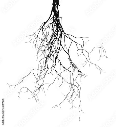 Fotografia  Black root system - vector set