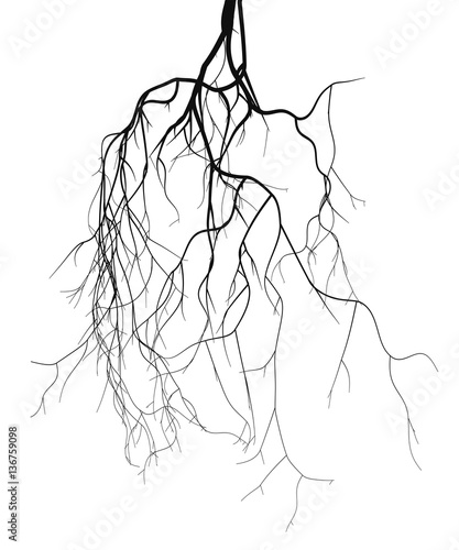 Photo  Black root system - vector set