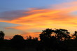 sky in sunset and motion cloud colorful beautiful with silhouett tree