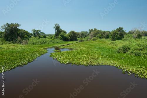 Fotografija  Pantanal wetland landscape