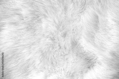 white artificial fur texture Fototapet