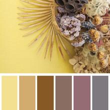 Dry Flowers, Color Palette