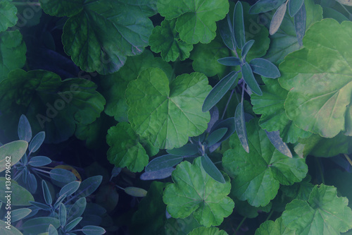 Garden Poster Spring top view image of green leaves pattern