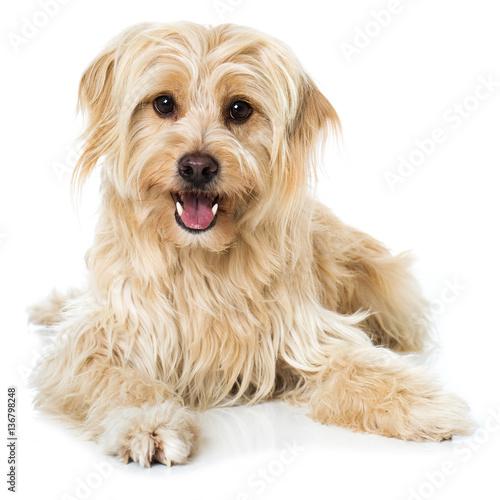 Foto  Niedlicher Mischlingshund
