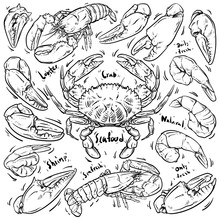 Seafood Hand Draw On White Bac...