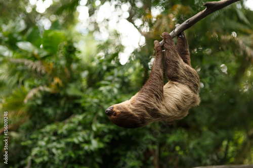 Photo sloth were hung on the branches to find plants  eat.