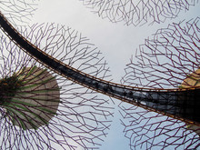 Solar-powered Supertrees At Si...