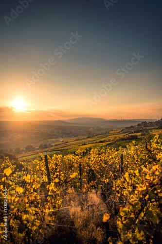 Deurstickers Oranje eclat Golden Autumn Vineyard